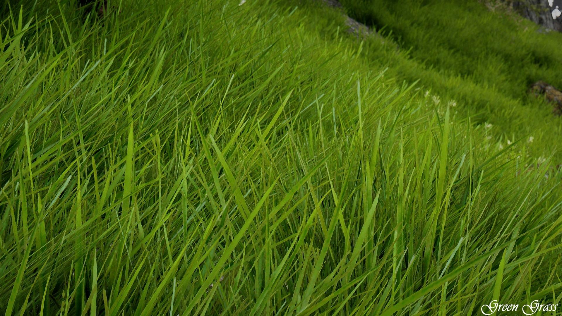 Green Grass 01.jpg
