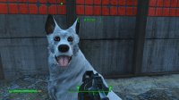 Dogmeat 1.jpg