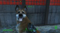 Dogmeat 3.jpg