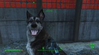 Dogmeat 4.jpg