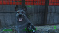 Dogmeat 5.jpg