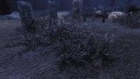 EWIs enhanced Soulcairn 05.jpg