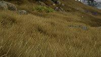 Green Grass 02.jpg
