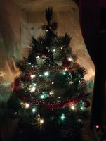 fir-tree-2.jpg