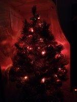 fir-tree-3.jpg