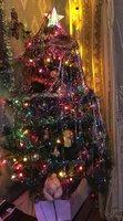 fir-tree-8.jpg
