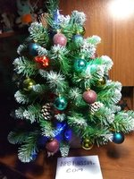 fir-tree-14.jpg