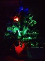 fir-tree-15.jpg