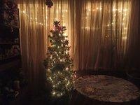 fir-tree-17.jpg